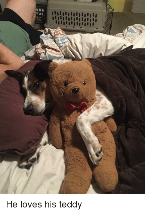 Loves and Teddy