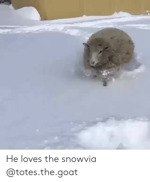 The Goat: He loves the snowvia @totes.the.goat