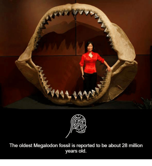 megalodon: he oldest Megalodon fossil is reported to be about  28 million  years old