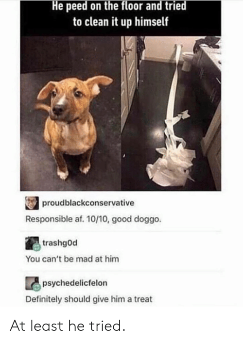 Af, Dank, and Definitely: He peed on the floor and tried  to clean it up himself  proudblackconservative  Responsible af. 10/10, good doggo.  trashgod  You can't be mad at him  psychedelicfelon  Definitely should give him a treat At least he tried.