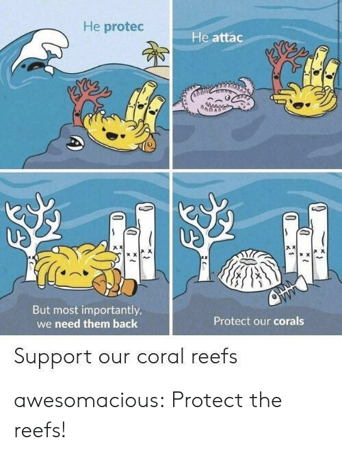 Tumblr, Blog, and Back: He protec  He attac  产ㅈ  声ㄨ  But most importantly  we need them back  Protect our corals  Support our coral reefs awesomacious:  Protect the reefs!
