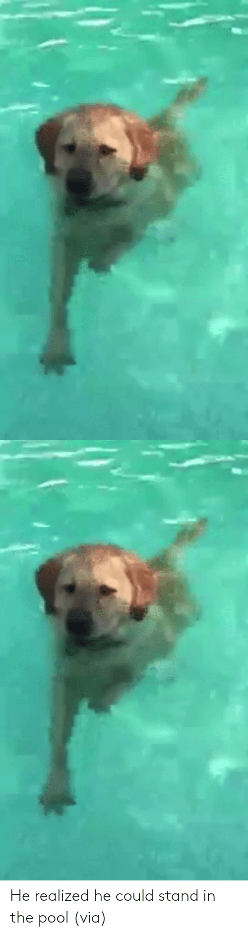 In The: He realized he could stand in the pool (via)
