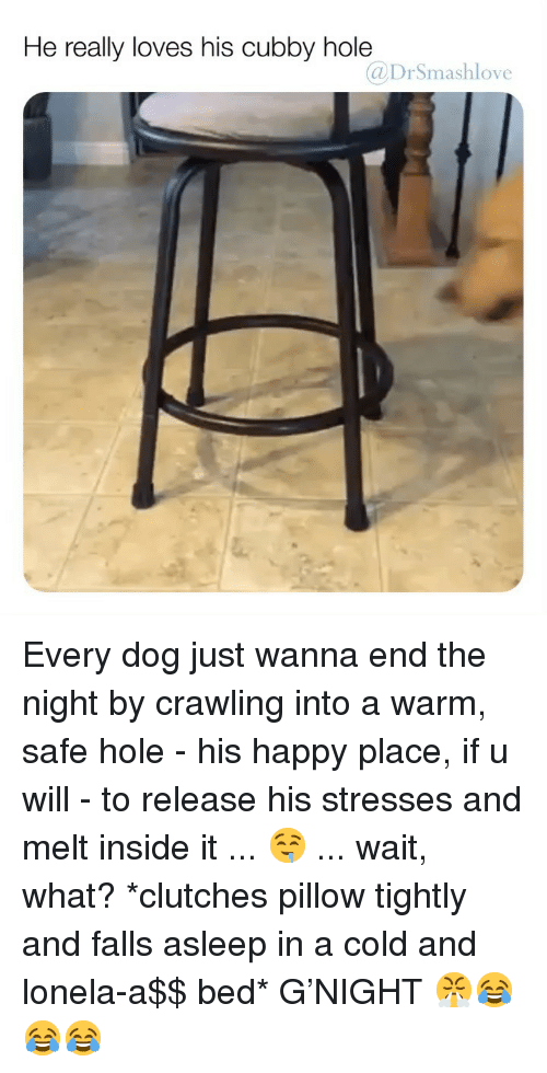 Memes, Happy, and Cold: He really loves his cubby hole  @DrSmashlove Every dog just wanna end the night by crawling into a warm, safe hole - his happy place, if u will - to release his stresses and melt inside it ... 🤤 ... wait, what? *clutches pillow tightly and falls asleep in a cold and lonela-a$$ bed* G'NIGHT 😤😂😂😂