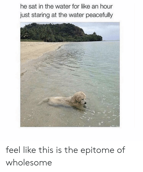 epitome: he sat in the water for like an hour  just staring at the water peacefully feel like this is the epitome of wholesome