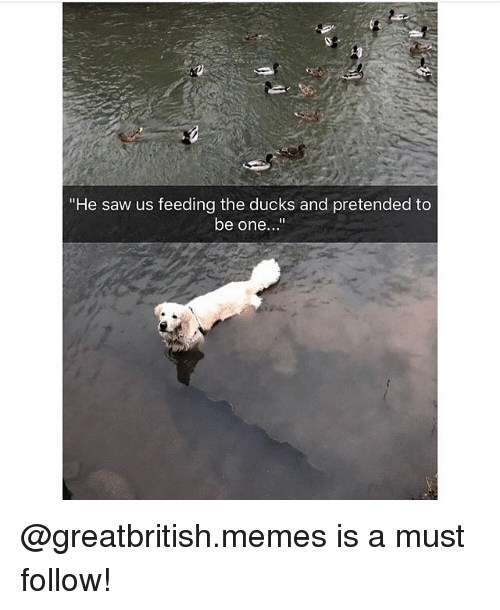 "Memes, Saw, and Ducks: ""He saw us feeding the ducks and pretended to  be one... @greatbritish.memes is a must follow!"