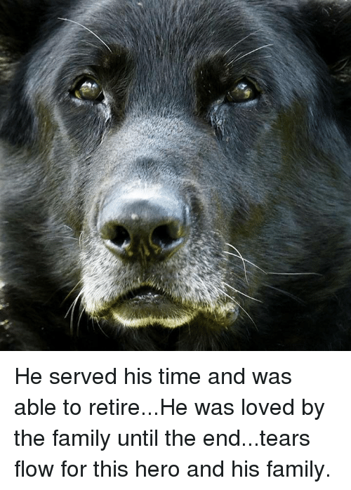 Family, Memes, and Time: He served his time and was able to retire...He was loved by the family until the end...tears flow for this hero and his family.