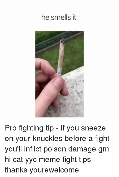 Meme, Memes, and Pro: he smells it Pro fighting tip - if you sneeze on your knuckles before a fight you'll inflict poison damage gm hi cat yyc meme fight tips thanks yourewelcome