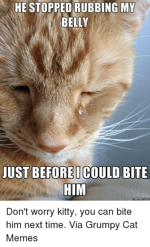 Grumpy Cats: HE STOPPED RUBBING MY  BELLY  JUST BEFOREI COULD BITE  HIM  memes Com Don't worry kitty, you can bite him next time. Via Grumpy Cat Memes