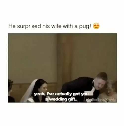 Yeah, Wife, and Wedding: He surprised his wife with a pug!  yeah, Iive actually got  a wedding gift. Paul us/Staryt