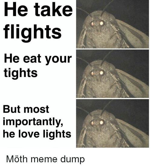 Tights: He take  flights  He eat your  tights  But most  importantly,  he love lights Möth meme dump
