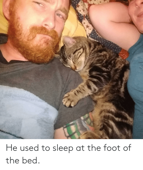 foot: He used to sleep at the foot of the bed.