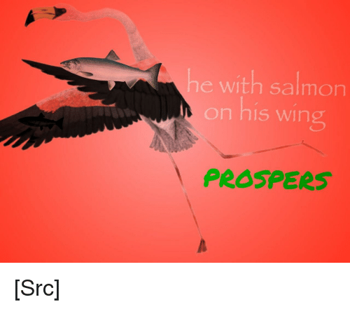 Reddit, Fish, and Salmon: he with salmon  on his wing  PROSPERS [Src]