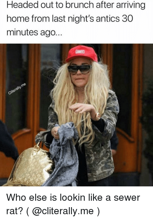 Home, Girl Memes, and Who: Headed out to brunch after arriving  home from last night's antics 30  minutes ago...  Iy Who else is lookin like a sewer rat? ( @cliterally.me )