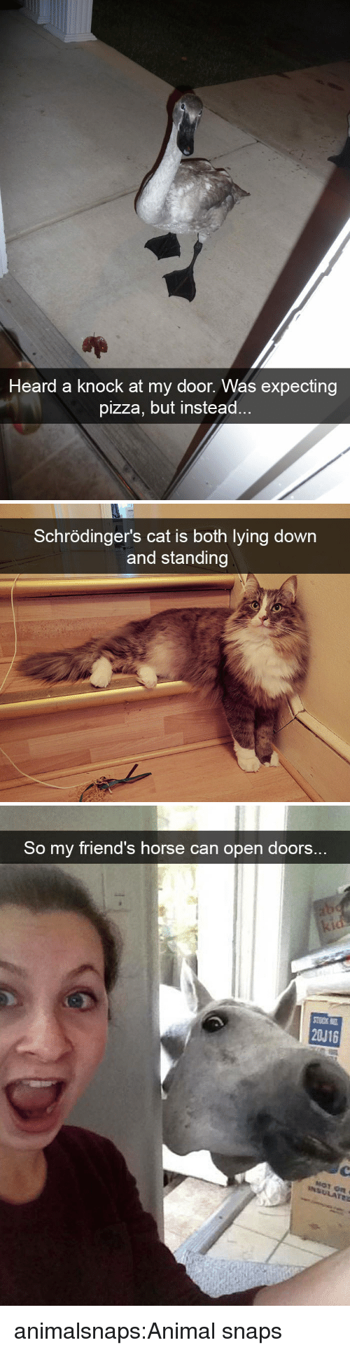 Friends, Pizza, and Target: Heard a knock at my door. Was expecting  pizza, but instead   Schrödinger's cat is both lying down  and standing   So my friend's horse can open doors..  20J16 animalsnaps:Animal snaps