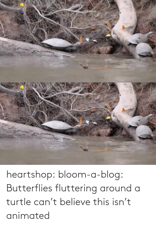 around: heartshop: bloom-a-blog: Butterflies fluttering around a turtle can't believe this isn't animated