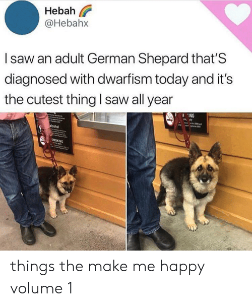 Cutest Thing: Hebah  @Hebahx  Isaw an adult German Shepard that'S  diagnosed with dwarfism today and it's  the cutest thing I saw all year  ING  acohol  SMOKING things the make me happy volume 1