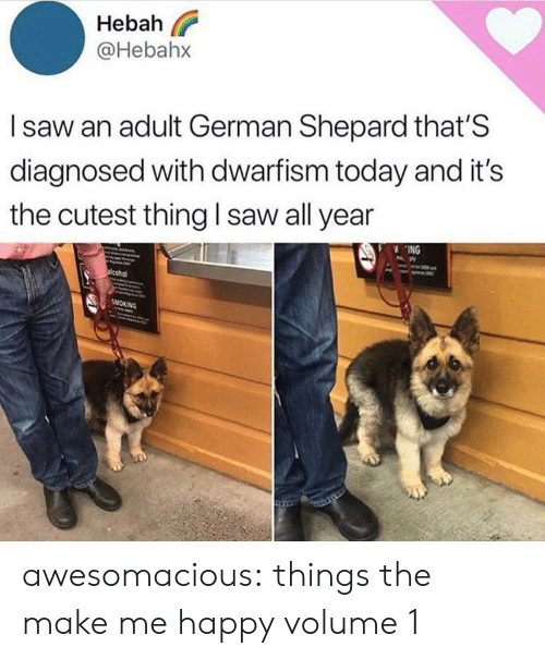 Saw, Smoking, and Tumblr: Hebah  @Hebahx  Isaw an adult German Shepard that'S  diagnosed with dwarfism today and it's  the cutest thing I saw all year  ING  acohol  SMOKING awesomacious:  things the make me happy volume 1