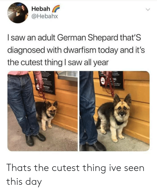 Cutest Thing: Hebah  @Hebahx  Isaw an adult German Shepard that'S  diagnosed with dwarfism today and it's  the cutest thing I saw all year  ING  MONING Thats the cutest thing ive seen this day