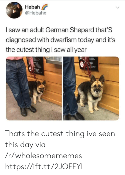 Cutest Thing: Hebah  @Hebahx  Isaw an adult German Shepard that'S  diagnosed with dwarfism today and it's  saw all year  the cutest thing  ING  sMORNG Thats the cutest thing ive seen this day via /r/wholesomememes https://ift.tt/2JOFEYL