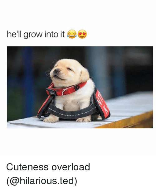 Funny, Ted, and Hilarious: he'll grow into it Cuteness overload (@hilarious.ted)
