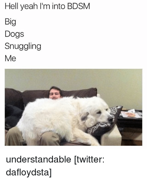 Dogs, Memes, and Twitter: Hell yeah I'm into BDSM  Big  Dogs  Snuggling  Me understandable [twitter: dafloydsta]