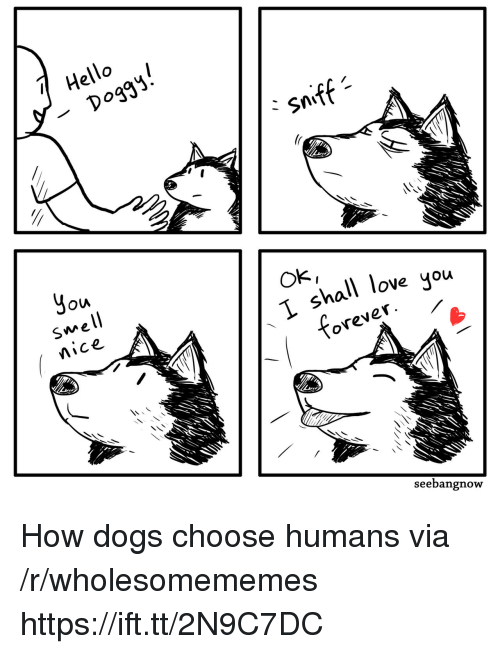 Dogs, Hello, and Love: Hello  6  -Dogg  sniff  Jou  well  Mice  Ok,  hall love you  ovever  seebangnow How dogs choose humans via /r/wholesomememes https://ift.tt/2N9C7DC
