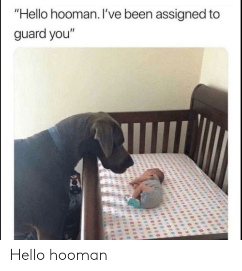 """Hooman: """"Hello hooman. I've been assigned to  guard you"""" Hello hooman"""