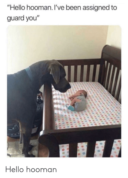 """Hooman: """"Hello hooman. l've been assigned to  guard you"""" Hello hooman"""