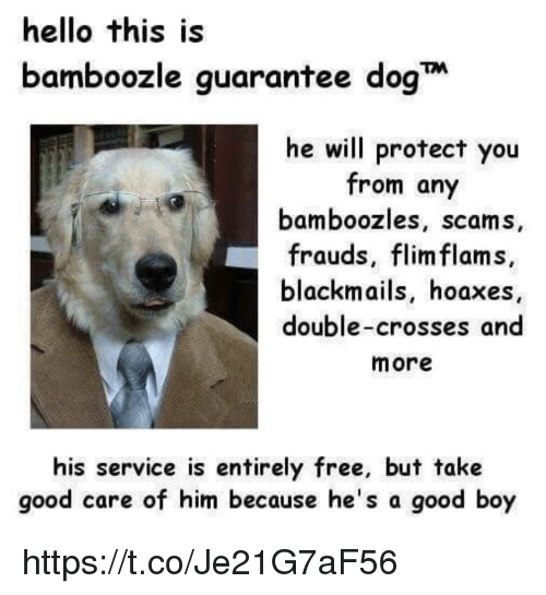 Hello, Memes, and Free: hello this is  bamboozle guarantee dog  he will protect you  from any  bamboozles, scams,  frauds, flim flams,  blackmails, hoaxes  double-crosses and  more  his service is entirely free, but take  good care of him because he's a good boy https://t.co/Je21G7aF56