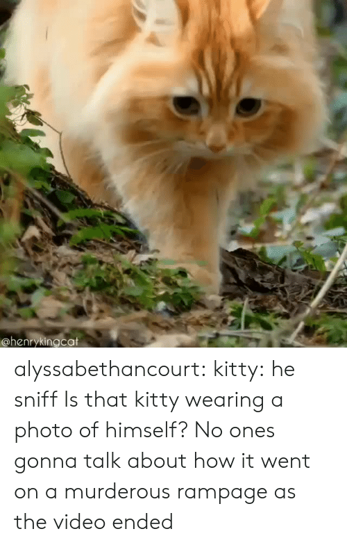 murderous: @henrykingcat alyssabethancourt: kitty: he sniff  Is that kitty wearing a photo of himself?   No ones gonna talk about how it went on a murderous rampage as the video ended