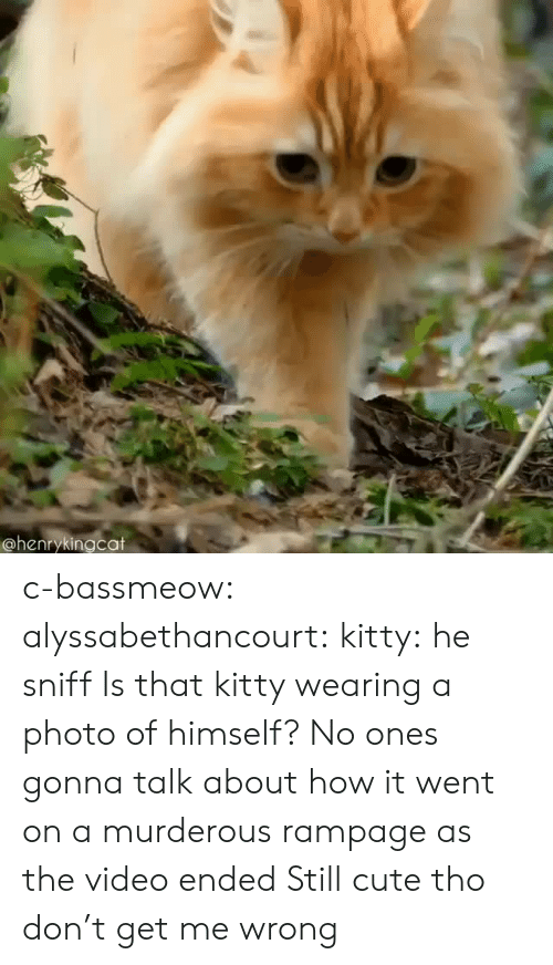 Cute, Tumblr, and Blog: @henrykingcat c-bassmeow:  alyssabethancourt: kitty: he sniff  Is that kitty wearing a photo of himself?   No ones gonna talk about how it went on a murderous rampage as the video ended   Still cute tho don't get me wrong