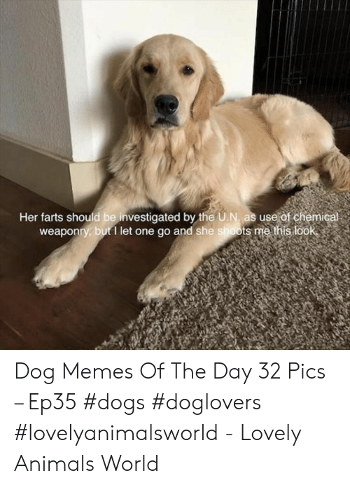 Animals, Dogs, and Memes: Her farts should be investigated by the U.N, as use of chemic  weaponry, but1 let one go and she shoots me this look Dog Memes Of The Day 32 Pics – Ep35 #dogs #doglovers #lovelyanimalsworld - Lovely Animals World