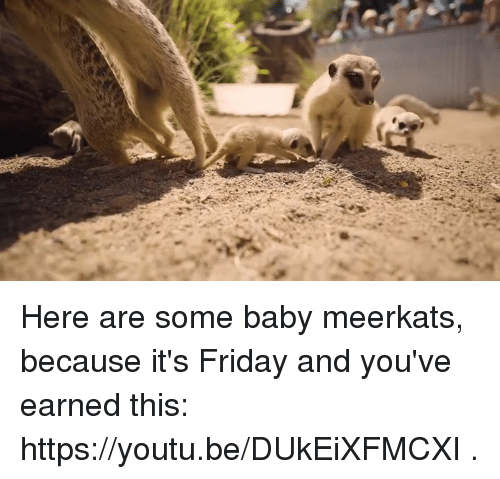 Dank, Friday, and It's Friday: Here are some baby meerkats, because it's Friday and you've earned this: https://youtu.be/DUkEiXFMCXI .
