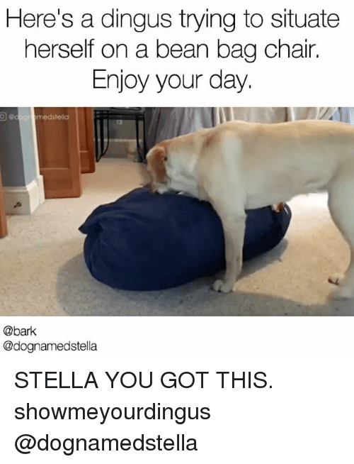 Memes, Chair, and 🤖: Here's a dingus trying to situate  herself on a bean bag chair.  Enjoy your day.  med stella  @bark  @dognamedstella STELLA YOU GOT THIS. showmeyourdingus @dognamedstella