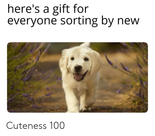 New, For, and Everyone: here's a gift for  everyone sorting by new Cuteness 100