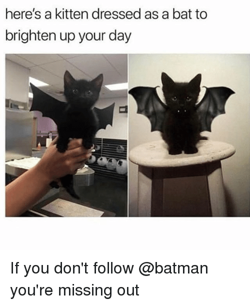 Batman, Trendy, and Bat: here's a kitten dressed as a bat to  brighten up your day If you don't follow @batman you're missing out