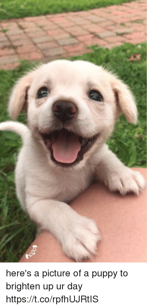 Puppy, Girl Memes, and A Picture: here's a picture of a puppy to brighten up ur day https://t.co/rpfhUJRtIS