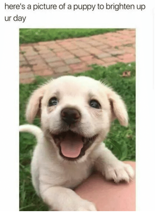 Puppy, A Picture, and Day: here's a picture of a puppy to brighten up  ur day