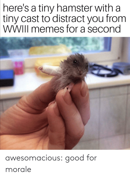 Second: here's a tiny hamster with a  tiny cast to distract you from  WWIII memes for a second awesomacious:  good for morale