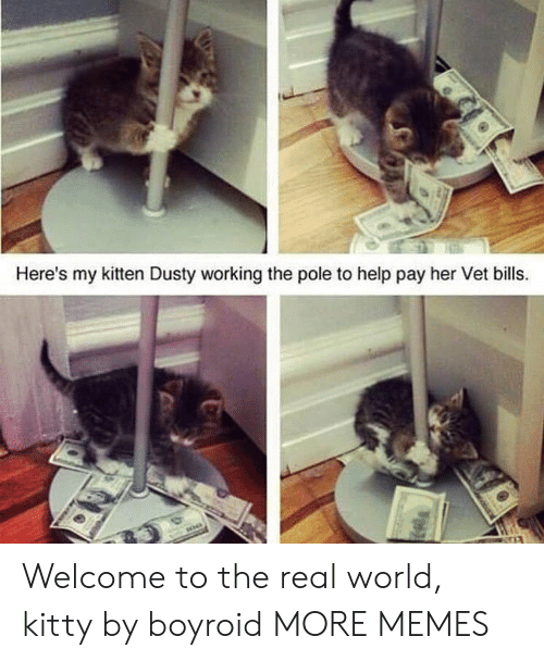 vet: Here's my kitten Dusty working the pole to help pay her Vet bills. Welcome to the real world, kitty by boyroid MORE MEMES