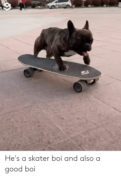 Dank, Good, and 🤖: He's a skater boi and also a good boi
