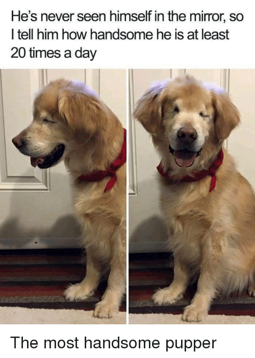 Mirror, Never, and How: He's never seen himself in the mirror, so  l tell him how handsome he is at least  20 times a day The most handsome pupper