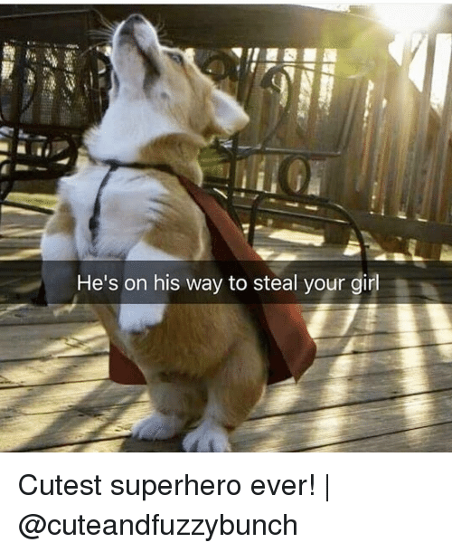 Memes, Superhero, and Girl: He's on his way to steal your girl Cutest superhero ever! | @cuteandfuzzybunch