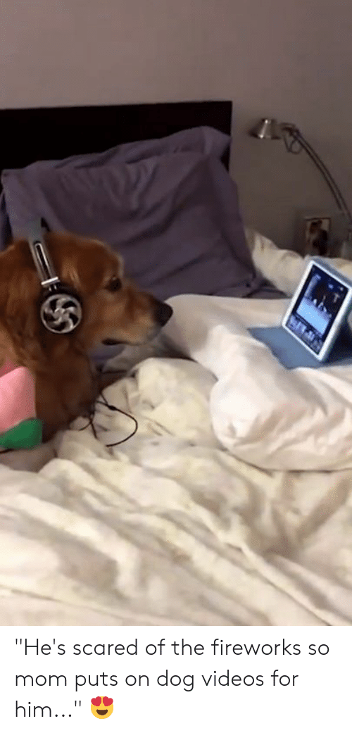 "Videos, Fireworks, and Mom: ""He's scared of the fireworks so mom puts on dog videos for him..."" 😍"