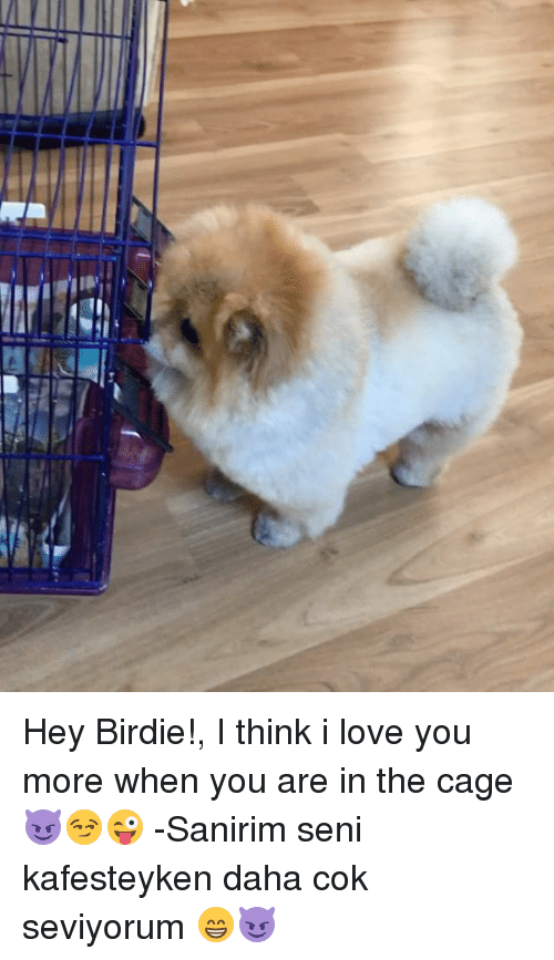 Love, Memes, and I Love You: Hey Birdie!, I think i love you more when you are in the cage😈😏😜 -Sanirim seni kafesteyken daha cok seviyorum 😁😈