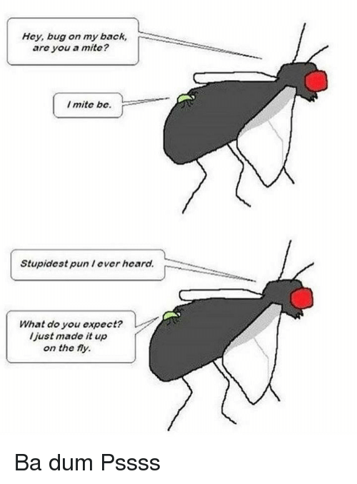 Back, Bug, and You: Hey, bug on my back,  are you a mite?  I mite be.  Stupidest pun lever heard.  What do you expect?  l just made it up  on the fy. Ba dum Pssss