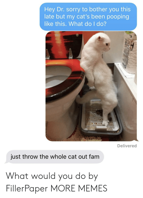 Cats, Dank, and Fam: Hey Dr. sorry to bother you this  late but my cat's been pooping  like this. What do I do?  Delivered  just throw the whole cat out fam What would you do by FillerPaper MORE MEMES