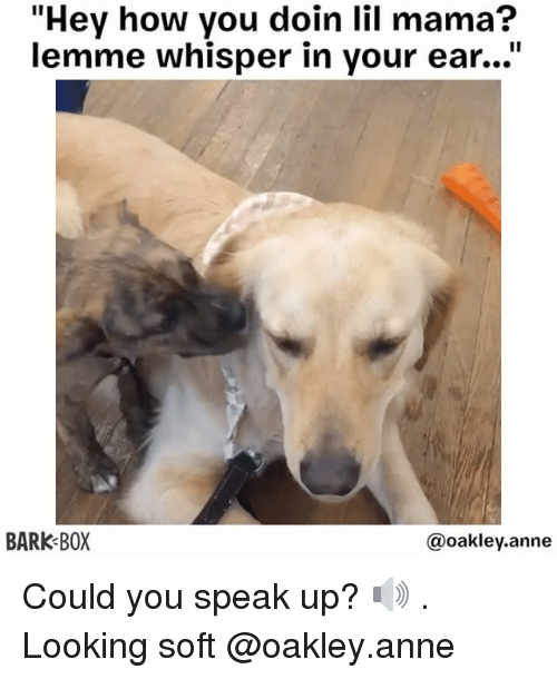 """how you doin: """"Hey how you doin lil mama?  lemme whisper in your ear...""""  BARK BOX  @oakley.anne Could you speak up? 🔊 . Looking soft @oakley.anne"""