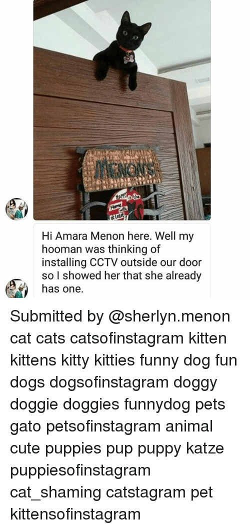 Cats, Cute, and Dogs: Hi Amara Menon here. Well my  hooman was thinking of  installing CCTV outside our door  so l showed her that she already  has one. Submitted by @sherlyn.menon cat cats catsofinstagram kitten kittens kitty kitties funny dog fun dogs dogsofinstagram doggy doggie doggies funnydog pets gato petsofinstagram animal cute puppies pup puppy katze puppiesofinstagram cat_shaming catstagram pet kittensofinstagram