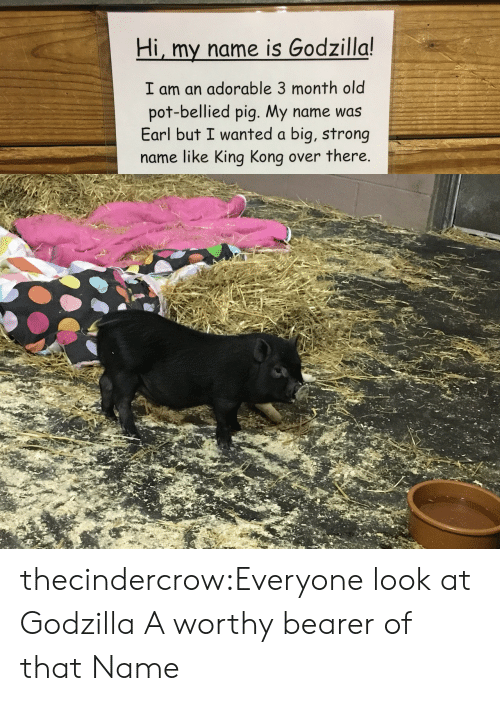 Godzilla: Hi, my name is Godzilla!  I am an adorable 3 month old  pot-bellied pig. My name was  Earl but I wanted a big, strong  name like King Kong over there. thecindercrow:Everyone look at Godzilla  A worthy bearer of that Name